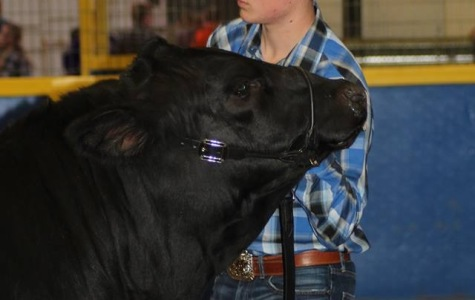 FFA members show well at first competition