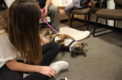 Counselors invite therapy dogs to combat end of cycle stress