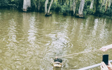 A group of tourists feeds an alligator a hot dog during a swamp tour on the outskirts of New Orleans.